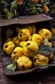 juicy,ripe quince fruit on wooden top