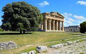 Stately oak trees juxtaposed imposing greek temple of Neptune - Paestum