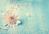 Little White Flower On The Blue Colored Wooden Background