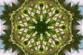 picture of kaleidoscope  - kaleidoscopic flower pattern background of white snowdrops - JPG