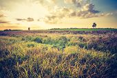 picture of grassland  - Landscape with withered grassland photographed in afternoon light - JPG