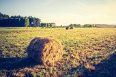 picture of hay bale  - Beautiful meadow landscape with hay bales and morning fog at sunrise - JPG