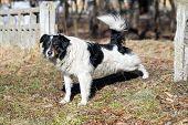image of stray dog  - Stray dog walks on a sunny day - JPG