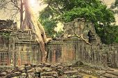 picture of mystique  - Ruins of ancient temple lost in jungle with a tree growing straight from the top of construction - JPG