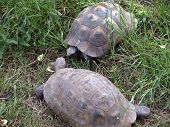Tortoise Brief Encounter