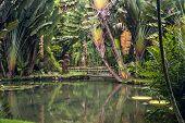 stock photo of epiphyte  - Botanical Garden of Rio de Janeiro Brazil - JPG