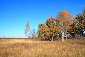yellow copse on autumn field