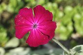 Bright Magenta Flower