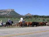 Driving Cattle