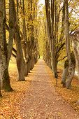 beautiful golden autumn wayside trees