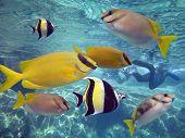 Lotsfishes