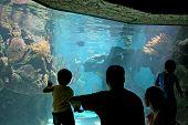 Aquarium Family Visit