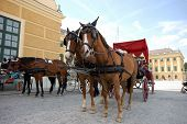 Horse Driven Cab