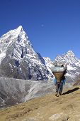 stock photo of sherpa  - Nepal Sherpa men working - Himalaya khumbu.