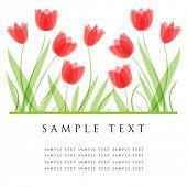 Tulpe Blumen. Design für Grußkarte