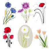 Meadow flowers set