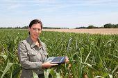 Agronomist in corn field