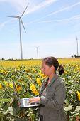 Agronomist in sunflowers field