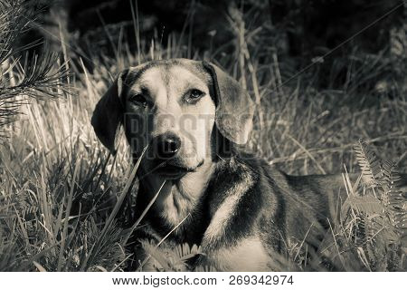 poster of Portrait Of A Dog. Beautiful Dog Portrait. Close Up Pf A Dog. Dog Animal. Stray Dog Portrait. Beauti