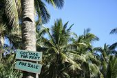 stock photo of surigao  - cottage for rent for sale sign on palm tree at edge of beach on tropical island in the philippines - JPG