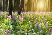Forest of brightly coloured flowers
