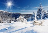 stock photo of snowy hill  - Winter trees in mountains covered with fresh snow - JPG