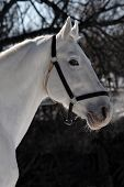 Winter horse portrait