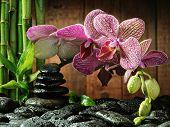 el bosque de bambús concepto Spa, Orquídea rosa y negro zen piedras en el fondo de madera, enfoque en la o