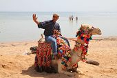 Egyptian man posing on his camel