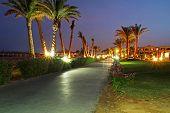 Bajo palmeras en la noche