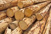 Debarked Logs