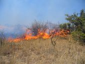 Wildfire in savanna (South Africa)