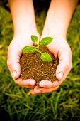 Hands Plant Iii