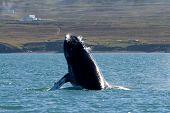 Whale Show
