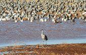 A Standout Crane