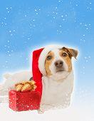 postcard with funny dog as santa, gift,