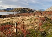 Wild Rose Hips Beside Lake Wanaka In Autumn, Otago New Zealand