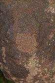 Exponierten Abschnitt ein Termite-Nest In einem Regenwald