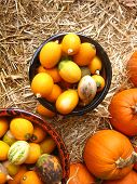 small pumpkins ad colorful gourds
