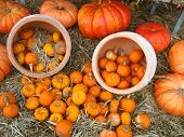 an arrangement of pumpkins and gourds with dish