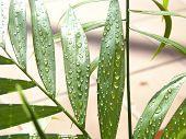 Leaf2