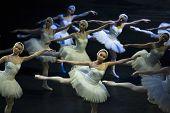 Swan Girls