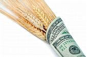 wheat sheaves wrapped in money