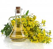 Flower of a mustard, Rape blossoms with bottle decanter oil, isolated on white background
