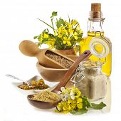 Mustard oil jar,  mustard powder, seeds, spoon,  mustard flower blossom  isolated on white background