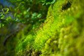 Moss Closeup