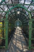 Green Pergola In A Park In Spring, Close Up