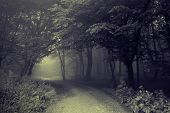 Road going trough a dark spooky forest with fog