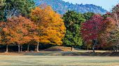 Autumn Laves At Nara Park In Nara