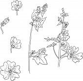 Set of line drawing mallow flowers